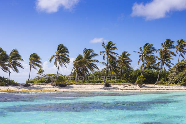 Paradise sandy beach with palm trees, Petit Tabac, Tobago Cays, The Grenadines, West Indies, Caribbean, Central America — Stock Photo