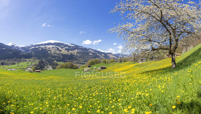 Panoramic of green meadows and wildflowers in spring, Luzein, Prattigau-Davos region, Canton of Graubunden, Switzerland — Stock Photo