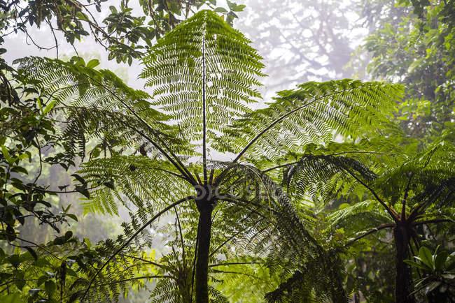 Зеленые растения, растущие в Monteverde Cloud лесной заповедник, Пунтаренас, Коста-Рика, Центральная Америка — стоковое фото
