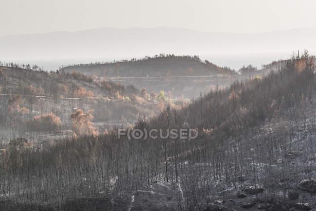 Fire damaged woods in mountains, Spetses, Saronic Islands, Attica Region, Aegean Coast, Greek Islands, Greece — Stock Photo