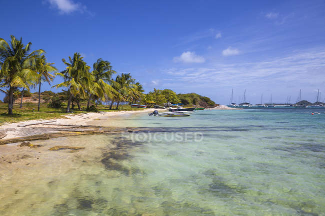 Crystal clear water and palm trees, Clifton Harbour, Union Island, The Grenadines, West Indies, Caribbean, Central America — Stock Photo