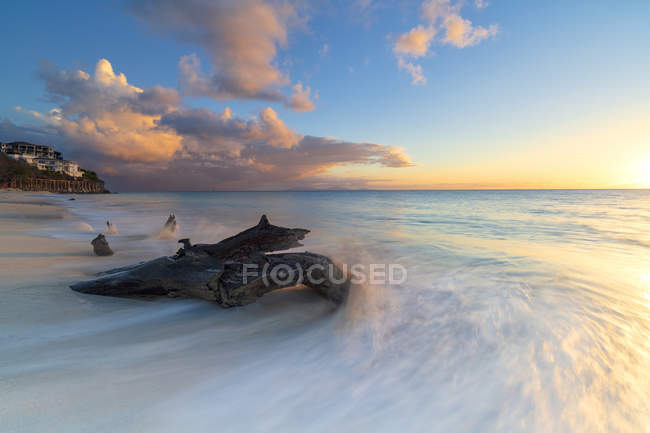 Tree trunk on Ffryes Beach at sunset, Antigua, Antigua and Barbuda, Leeward Islands, West Indies, Caribbean, Central America — Stock Photo