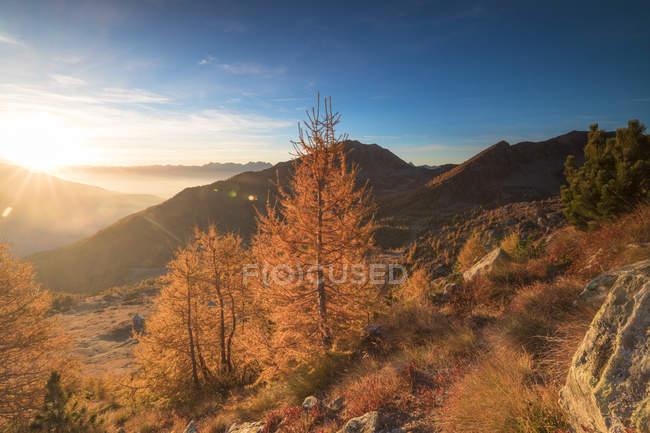 Барвисті larches під час осіннього сезону на заході сонця, Alpe Arcoglio Valmalenco, Valtellina, Ломбардія, Італія — стокове фото