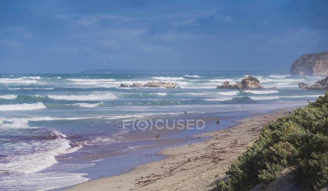 Прибережний ландшафт на друк Bay збереження парку на острові Кенгуру, Австралія, тихоокеанський — стокове фото
