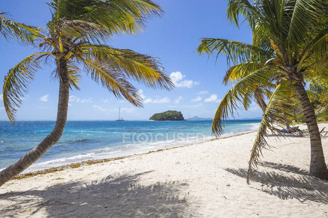 Sandy beach with palm trees, Petit Bateau, Tobago Cays, The Grenadines, West Indies, Caribbean, Central America — Stock Photo