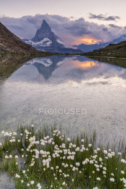 Cotton grass on shore of lake Riffelsee with the Matterhorn on background, Zermatt, canton of Valais, Swiss Alps, Switzerland — Stock Photo
