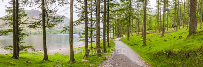 Rural path in green forest at Buttermere lake, Lake District National Park, Cumbria, England, United Kingdom — Stock Photo