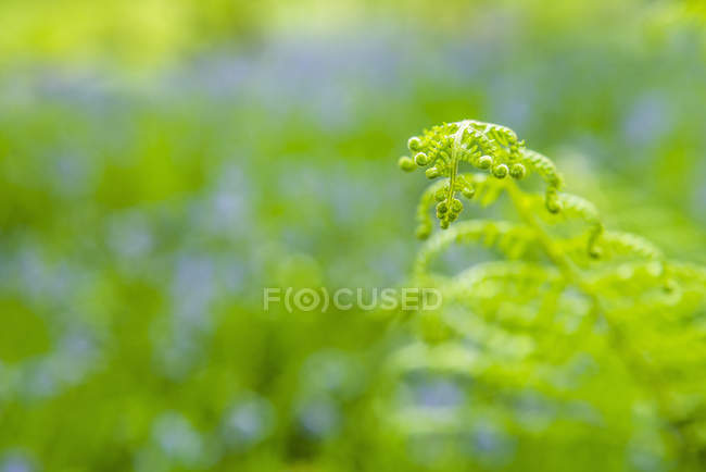 Close-up of green fern leaf in field — Stock Photo