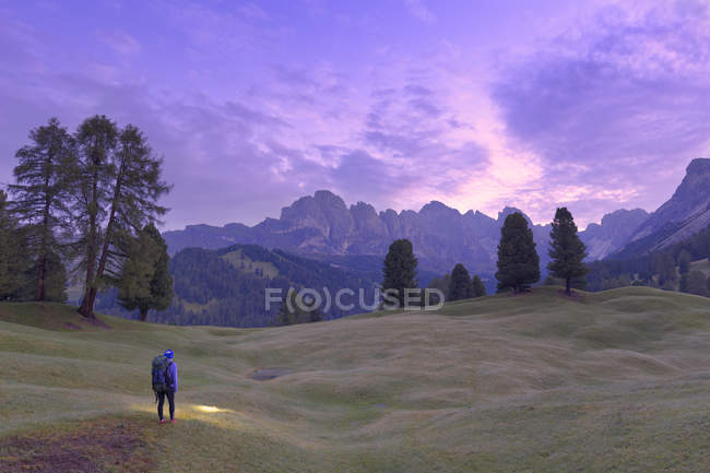 Hiker looking at pink light of dusk with Odle group in the background, Selva, Gardena Valley, South Tyrol, Dolomites, Italy, Europe - foto de stock
