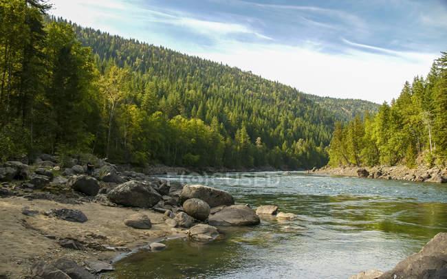 Вид реки Клируотер и леса на склоне вблизи Клируотер, Британская Колумбия, Канада, Северная Америка — стоковое фото