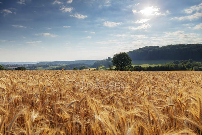 Harvest Stock Photos Royalty Free Images Focused