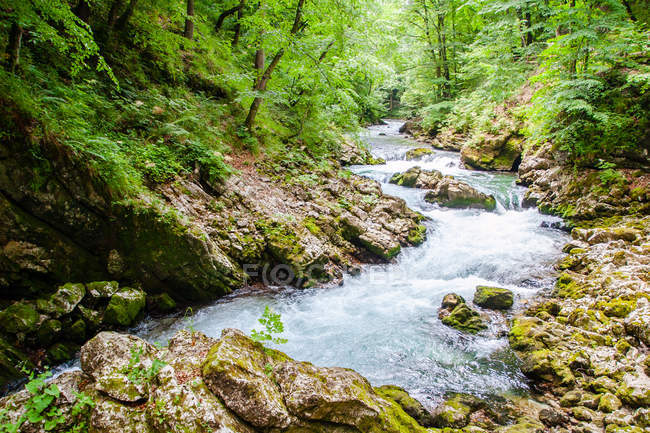 Radovna River flowing through Vintgar Gorge in woods, near Bled, Slovenia — Stock Photo