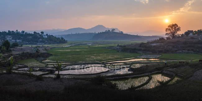 Paysage de rizières de riz au coucher du soleil, près de Ranomafana, Haute Matsiatra région, Madagascar, Afrique — Photo de stock