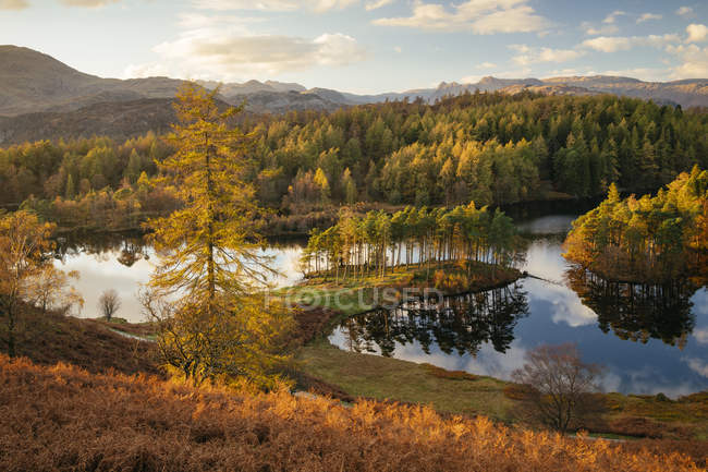Lake and conifer woods in autumn light at Tarn Hows, Lake District National Park, Cumbria, England, United Kingdom — Stock Photo