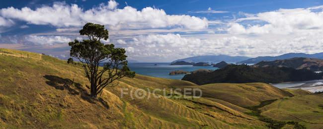 Vista panoramica di albero solo che cresce sulla costa occidentale della penisola di Coromandel, North Island, Nuova Zelanda, Pacifico — Foto stock