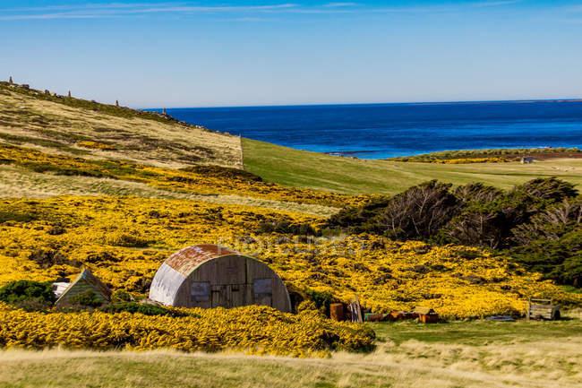 Vista panoramica su prati di New Island, Isole Falkland, Sud America — Foto stock