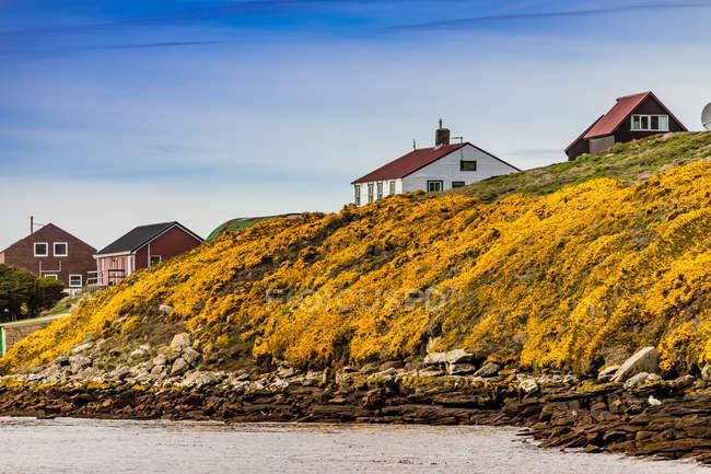 Vista panoramica di New Island con le tradizionali case nelle Isole Falkland, Sud America — Foto stock