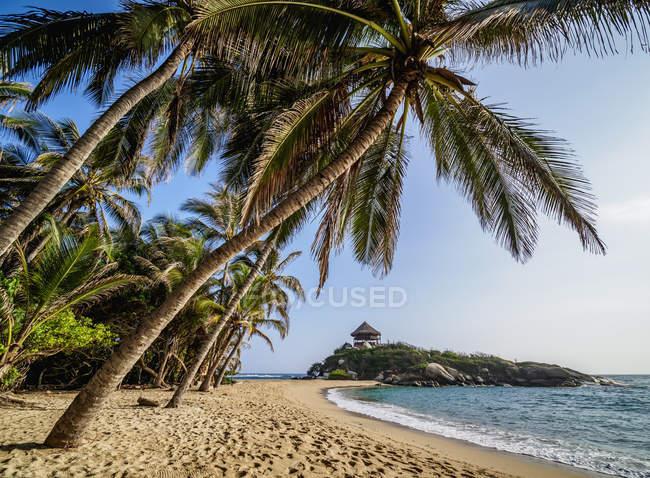 Пальмові дерева на пляжі Ель-Кабо Сан-Хуан-дель-Guia Тайрона Національний природний парк, Маґдалена, Карибського басейну, Колумбії, Південна Америка — стокове фото