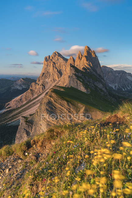 Blooming globeflowers on slope and Seceda mountain in Ortisei, Italy, Europe — стокове фото
