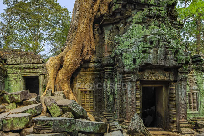 Tree root on gopura entrance at 12th century temple Ta Prohm, a Tomb Raider film location, Angkor, UNESCO World Heritage Site, Siem Reap, Cambodia, Indochina, Southeast Asia, Asia — Foto stock