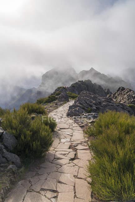 Névoa sobre o passeio nas montanhas de vereda do Areeiro, Funchal, madeira, Portugal, Atlântico, Europa — Fotografia de Stock