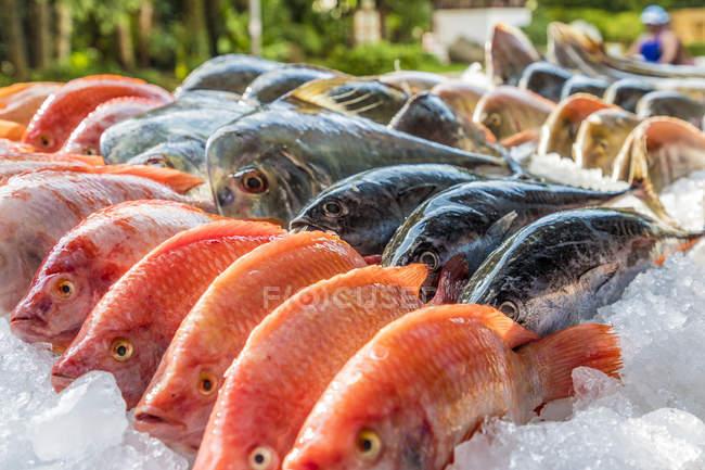 Fresh fish on market stall in Kata, Phuket, Thailand, Southeast Asia, Asia — Stock Photo