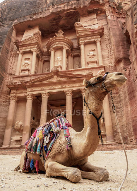 Camel in front of The Treasury (Al-Khazneh), Petra, Ma'an Governorate, Jordan, Middle East — стокове фото
