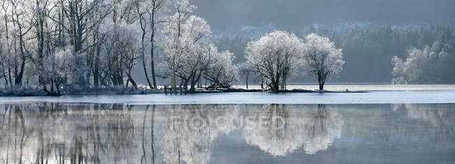 Partially frozen Loch Ard and hoar covered trees, Aberfoyle, Trossachs National Park, Stirling District, Scotland, United Kingdom, Europe — стокове фото