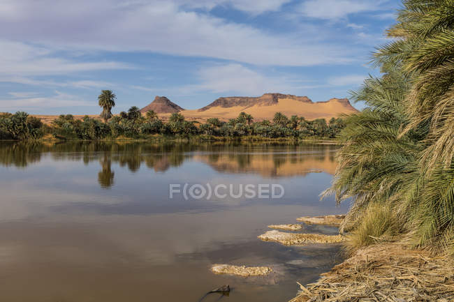Salt water lake and palm trees in Northern Chad, Africa — Stock Photo