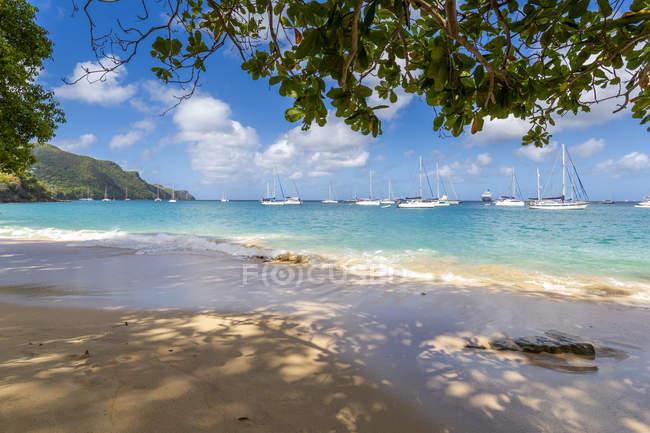 Піщаний пляж з пальмами в Порт-Елізабет, Адміралтейство Bay, Бекія, Гренадини, Навітряних островів, Вест-Індії, Карибського басейну, Центральної Америки — стокове фото