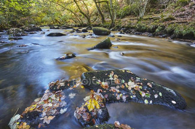 Древние леса и реки Тейн осенью, Национальный парк Дартмур, Девон, Англия, Великобритания, Европа — стоковое фото