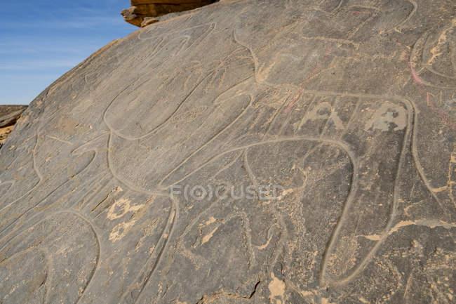 Nahaufnahme prähistorischer Felszeichnungen in der Nähe der Oase von Taghit, Westalgerien, Nordafrika, Afrika — Stockfoto