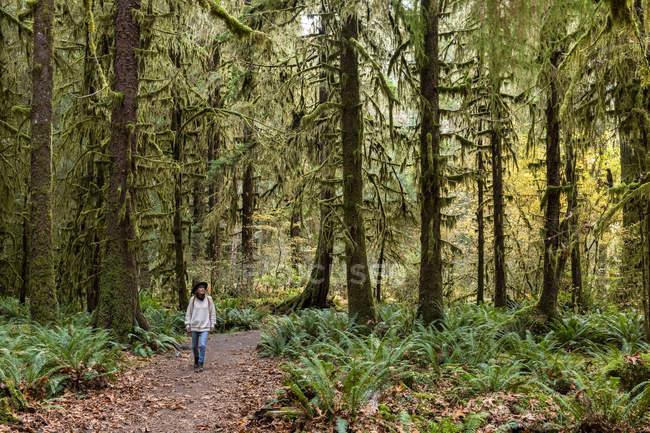 Mulher no chapéu que anda no salão da floresta húmida de Mosses, Parque Nacional Olímpico, estado de Washington, Estados Unidos da América, America do Norte — Fotografia de Stock