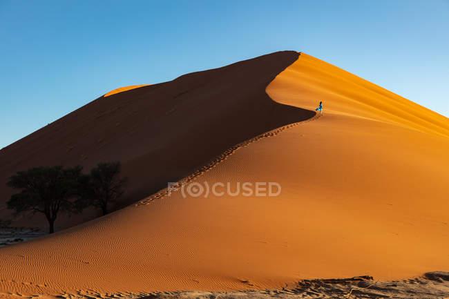 Модель альпинизма Дюна 13, Sossusvlei, Намибия, Африка — стоковое фото