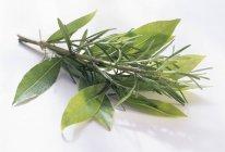 Alecrim e folhas de louro — Fotografia de Stock