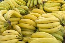 Cachos de bananas maduras — Fotografia de Stock
