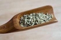 Semi di finocchio su scoop — Foto stock