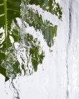Vista da vicino di una foglia verde di Monstera sotto l'acqua corrente — Foto stock