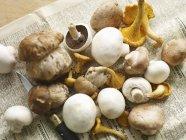 Funghi porcini, finferli e pulsante — Foto stock