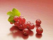 Fresh picked redcurrants — Stock Photo