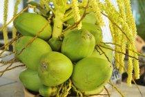 Noci di cocco cresce su staminali — Foto stock