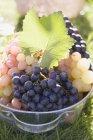 Зелений і чорного винограду — стокове фото