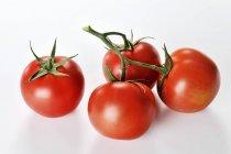 Four Vine Ripe Tomatoes — Stock Photo