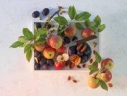 Susine e mele mature rosse — Foto stock