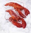 Aragoste su ghiaccio tritato — Foto stock