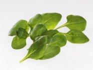 Foglie di spinaci freschi — Foto stock