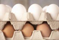 Uova marrone e bianche — Foto stock