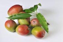 Manghi maturi freschi — Foto stock