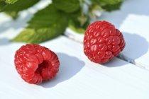 Frambuesas frescas maduras - foto de stock