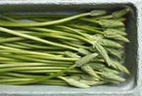 Asparagi selvatici verdi — Foto stock